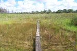 TS/Ph-4 boardwalk, Taylor Slough