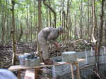 Melissa Romigh setting up autosamplers for flume study inside a mangrove forest