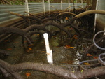 Water sheet flow inside a flume to measure nutrient / sediment fluxes in a mangrove forest at SRS-6, Shark River Slough