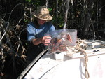 Nicole Poret weighing mangrove fine roots to set up a decomposition experiment, Shark River Slough