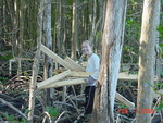 Melissa Romigh carrying wood to construct boardwalk in mangrove forest, Shark River Slough