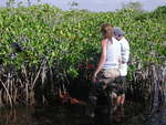 Left to right: Nicole Poret and Carlos Coronado-Molina deploying bags to determine decomposition rates of mangrove fine roots, Taylor Slough