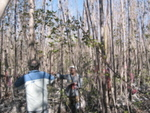 Jay Sah measuring tree height in a mangrove forest impacted by Hurricane Wilma, Harney River