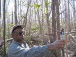 Jay Sah measuring tree density in a mangrove forest impacted by Hurricane Wilma, Harney River