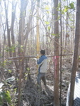 Nilesh Timilsina measuring tree height in a mangrove forest impacted by Hurricane Wilma, Harney River