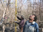 Left to right: Mike Ross and Nilesh Timilsina measuring mangrove tree height after Hurricane Wilma, Harney River