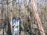 Left to right: Jay Sah and Nilesh Timilsina measuring diameter at breast height in mangrove forests damaged by Hurricane Wilma, Harney River