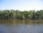 Mangrove forest, Shark River Slough