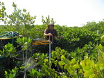 Xavier Zapata (FIU graduate student) collecting a groundwater sample, Taylor Slough