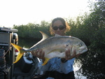 Crevalle jack, Rookery Branch, Shark River