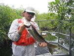 Bill Loftus with a snook, Rookery Branch