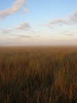 Early morning in a short-hydroperiod Everglades marsh (south of TS/Ph-1b), Taylor Slough