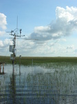 Eddy covariance and meteorological tower in a long-hydroperiod Everglades marsh during the height of the wet season, 2008 (at SRS-2), Shark River Slough