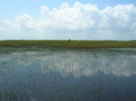 Long-hydroperiod Everglades marsh, wet season, 2008 (near SRS-2), Shark River Slough