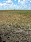 Long-hydroperiod Everglades marsh under extremely dry conditions, late dry season, 2009 (near SRS-2), Shark River Slough