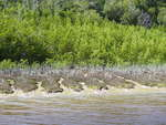 Mangrove growth along the Harney River