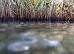 Mangrove prop roots by Jennifer S. Rehage