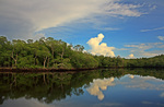Little Shark River reflection by Franco A.C. Tobias