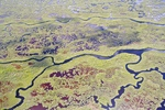 Tributary of Shark River by Stephen Davis