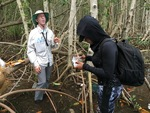 Dr. John Kominoski and Priscilla Brown (FIU Teach Undergraduate) collecting mangrove leaves from seedling mangrove trees.
