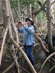 Cathy Laroche (FCE LTER RET, Felix Varela High School) measuring the heights of mangrove trees. by Nick Oehm