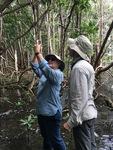 Cathy Laroche (FCE LTER RET, Felix Varela High School) and Dr. John Kominoski measuring the heights of mangrove trees. by Nick Oehm