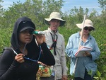 Priscilla Brown (FIU Teach Undergraduate, left foreground) using a salinity meter to measure salinity. Dr. John Kominoski and Cathy Laroche (FCE LTER RET) recording data (background).