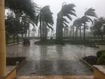 FIU MMC Campus After Hurricane Irma #1 by Florida International University