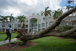 Fallen Tree on MMC Campus After Hurricane Irma by Florida International University