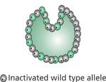 Early Gastrula with Skewed X-Inactivation by Tracey A. Weiler